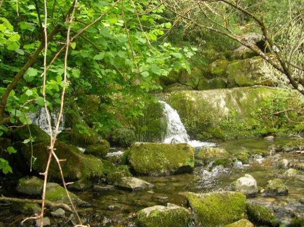 Nacimiento Rio Cadagua_Cadagua riverbird.
