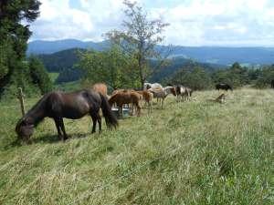31_caballos